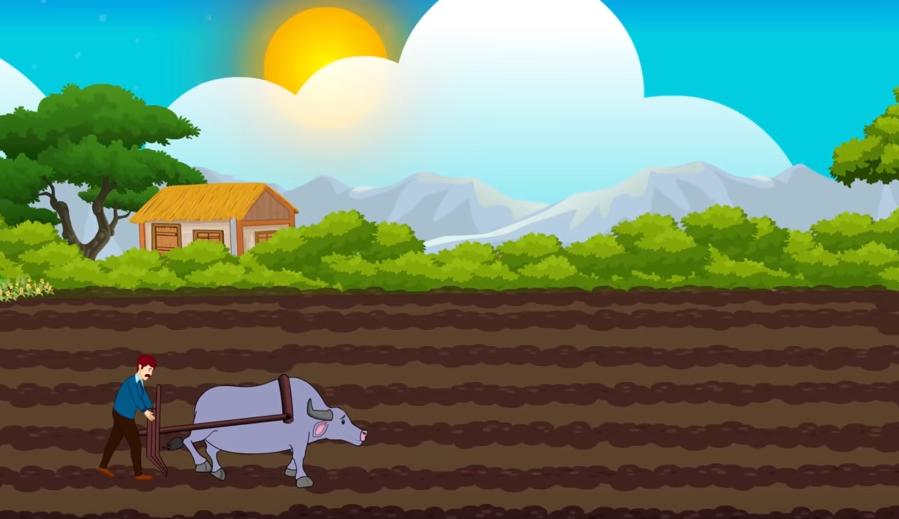 Farmer ploughing field using buffalo